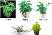 [농촌진흥청]식물, 실내 '미세먼지' 줄이는 효과 있다